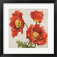 Framed Poppies on Silk