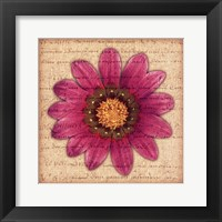 Framed Purple Gazania