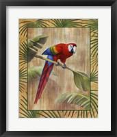 Framed Scarlet Macaw