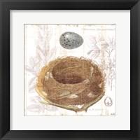 Framed Botanical Nest III