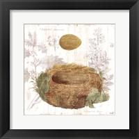 Framed Botanical Nest IV