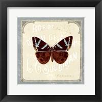 Parisian Butterfly Framed Print