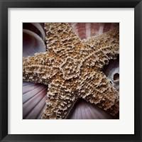Macro Shells I Framed Print