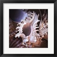 Framed Macro Shells II