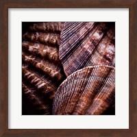 Framed Macro Shells V