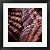 Macro Shells V Framed Print