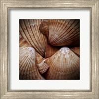 Framed Macro Shells VI