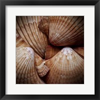 Framed Macro Shells VI