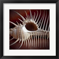 Framed Macro Shells VIII