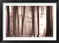 Framed Cloaking Woods