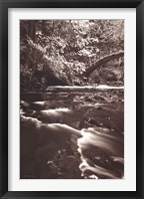 Framed Whatcom Creek