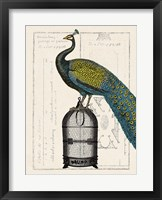 Framed Peacock Birdcage II