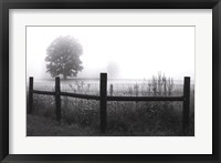 Framed Fog and Fence