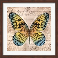 Framed Butterflies I