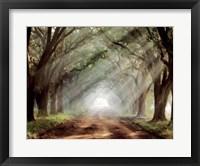 Framed Evergreen Plantation B