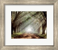 Framed Evergreen Plantation B