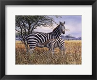 Framed Zebra and Foal