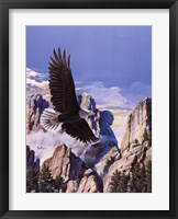 Framed (Freedom) Eagle in Flight