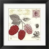 Framed Raspberry Notes