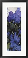Framed Lilac Spray I