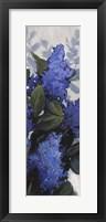 Framed Lilac Spray II
