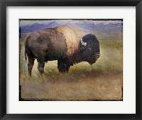 Bison Portrait II Framed Print
