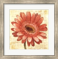 Framed Blushing Gerbera on Cream
