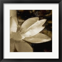 Framed Bronze Lily IV