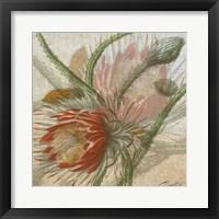 Desert Botanicals II Framed Print