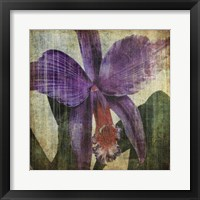 Framed Pacific Orchid II