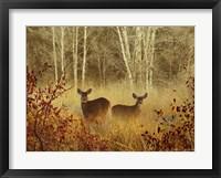 Framed Foggy Deer