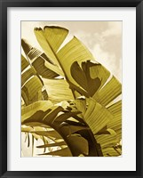 Framed Palm Fronds I