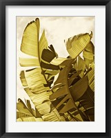 Palm Fronds II Framed Print
