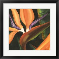Framed Bird Of Paradise Tile IV