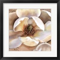 Framed Magnolia Masterpiece II