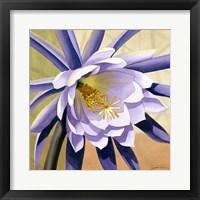 Framed Desert Bloom II