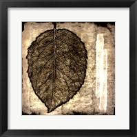 Framed Fall Leaves III