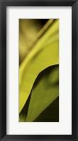 Framed Leaf Detail I