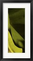 Leaf Detail III Framed Print