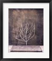 Framed Desert Form II