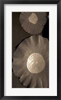 Framed Lotus I