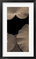 Framed Lotus II