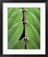 Leaf Design II Framed Print