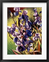 Framed Iris Garden I