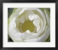 Framed Delicate Lotus I