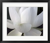 Framed Delicate Lotus V