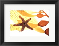 Framed Tidepool Discoveries I