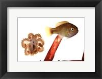 Framed Tidepool Discoveries IV