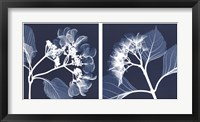 Framed Hydrangeas [Negative]