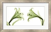 Framed Lilies [Positive]